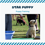 Star Puppy, Puppy Training Image